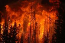 Екологічні наслідки пожеж в Луганській області